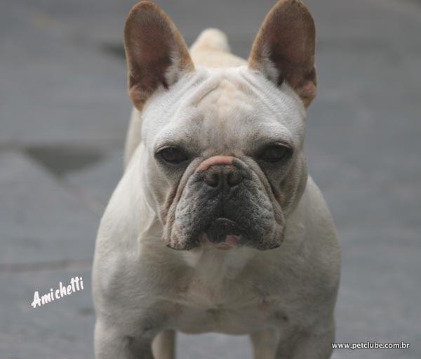 O Bulldog Frances e as O Bulldog Baba Muito