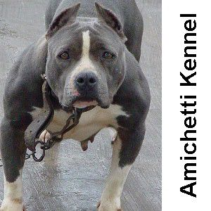 OVER BULLY 100% AMICHETTI