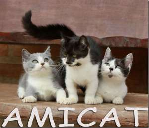 munchkin mini gato toycat